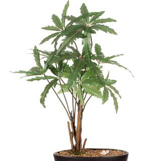 K nstliche zimmer aralie deko kunstpflanzen for Deko grunpflanzen