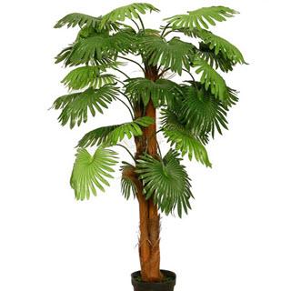 Fächerpalme Künstliche Palme