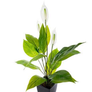Friedenslilie Kunstblumen Spathiphyllum