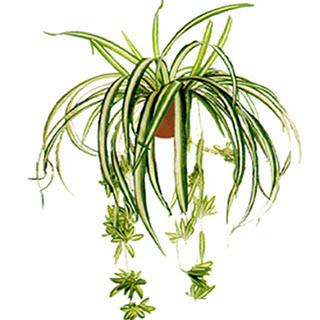 Grünlilie Kunstpflanze