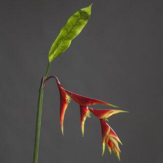 Helikonie Kunstblume