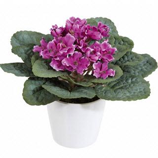 Usambaraveilchen Kunstblumen Deko