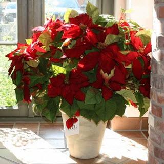 Weihnachtsstern Kunstblumen Deko