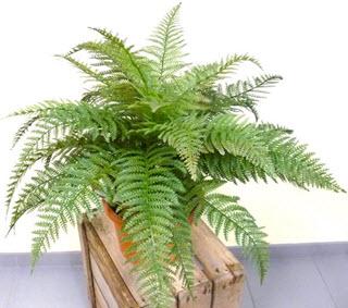 Farn Kunstpflanze