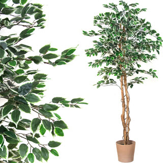 Klassische Ficus Kunstpflanze fürs Büro