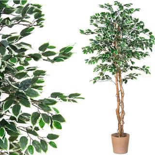 Maxstore Kunstbaum Ficus, echtholz stamm