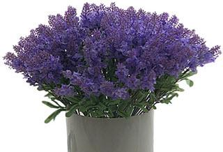 Lavendel künstlich