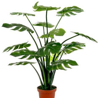 Monstera Kunstpflanze