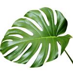 K nstliche gr npflanzen for Deko grunpflanzen