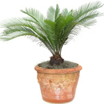 künstliche Palmen